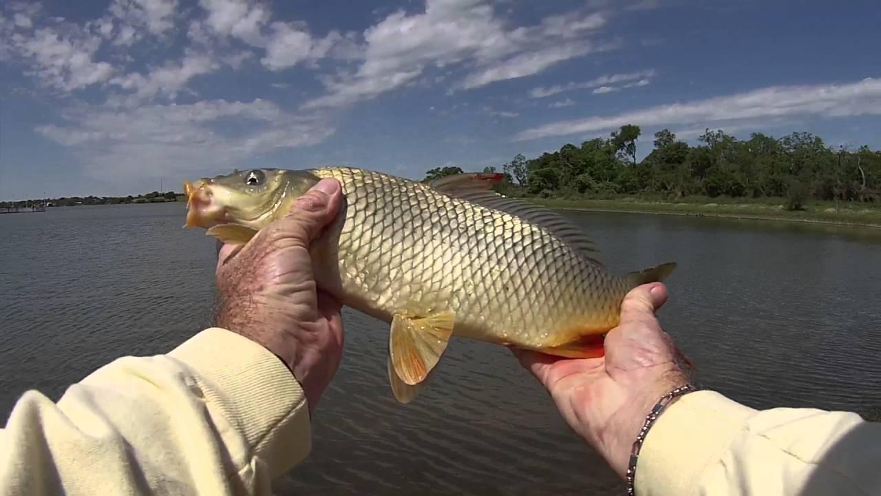 Carp fishing at lake corpus chrisiti youtube for Corpus christi fishing report