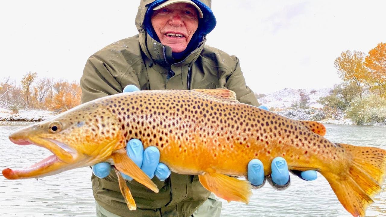 The Bighorn Wild Trout of October 2020