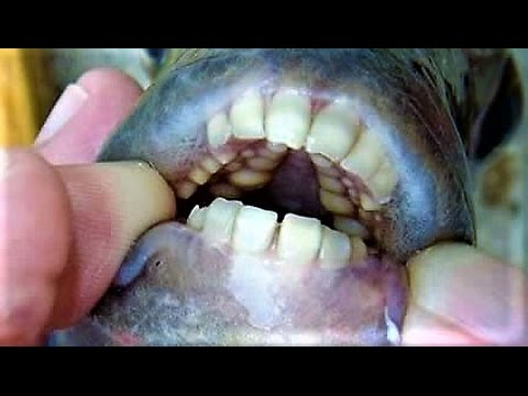 20-epic-creatures-with-terrifying-teeth