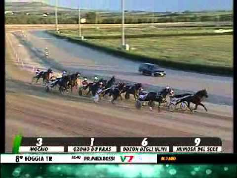 13/09/2013, Foggia , Premio Piedirosso