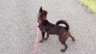 甲斐犬「尾張乃陸」のHomeになっている愛知池での散歩の様子です。 ...