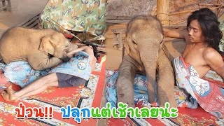 ฺBaby Elephant Junior Wake up early to wake up dad  - junior Family In Thailand