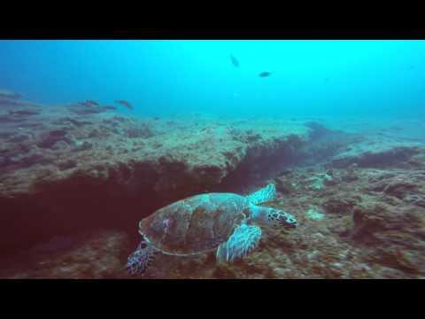 South Africa - Scuba Diving - KwaZulu-Natal - Umkomaas - Aliwal Shoal