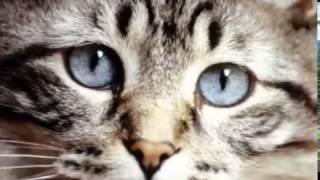 видео Оптимальный возраст для стерилизации кошки и кастрации кота