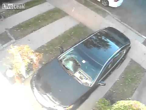 Кот разбивает лобовое стекло машины  Funny Cat ДТП! Авария! Видеорегистратор