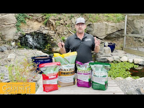 8/26/2021 All Things Grass Seed with Sean