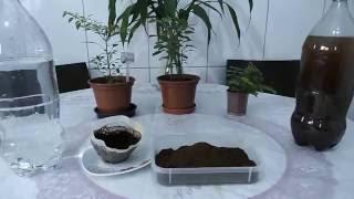 Como fazer Adubo Orgânico com Pó de Café