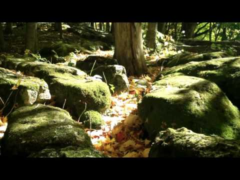 Moss with forest sounds