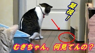 先週に引き続き、お母ちゃんは東京へ日帰り出張   ♂猫だいずは尿の検査...
