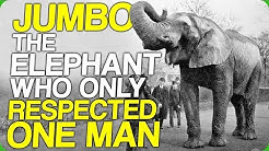 Jumbo, The Elephant Who Only Respected One Man (How Do You Stop a Giant Elephant)