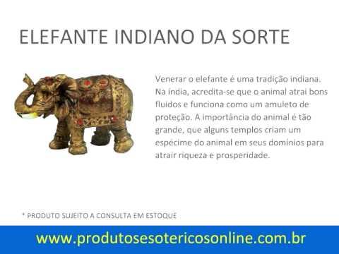 Elefante Indiano Da Sorte Youtube