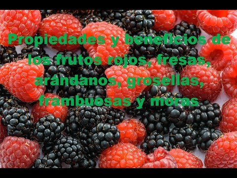 Beneficios del te frutos del bosque cuales son