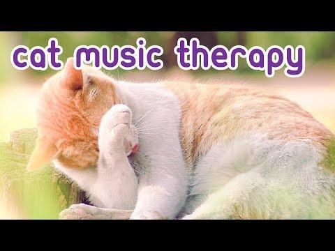 Lagu Cat Therapy -12 Jam Musik Santai Untuk Felines! 🎼