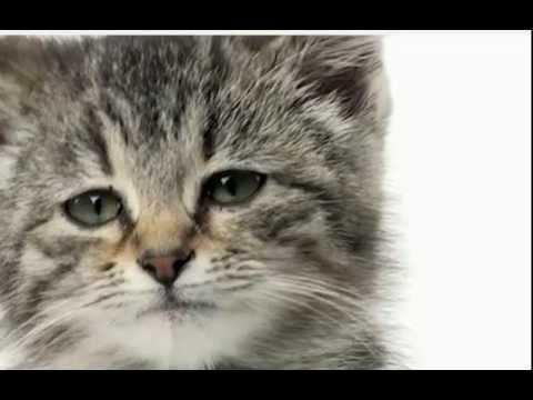котята картинки грустные
