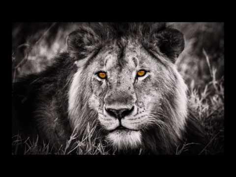 SILAZ   Black Lion - YouTube