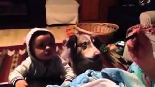Собака научилась говорить