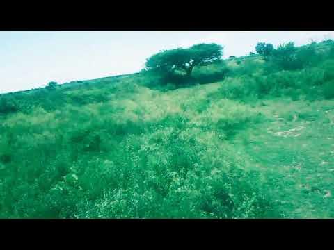 Download Hanuuniye iyo Aamina hees cirka sagal kuyaaliyo orginal song
