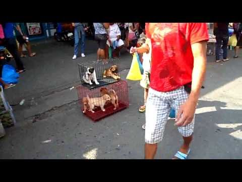 A Pet Store in the Markets of Downtown Malolos