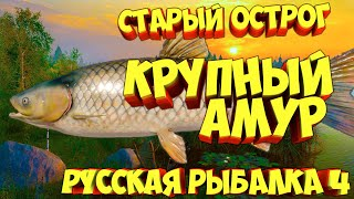 русская рыбалка 4 Амур озеро Старый Острог рр4 фарм Алексей Майоров russian fishing 4