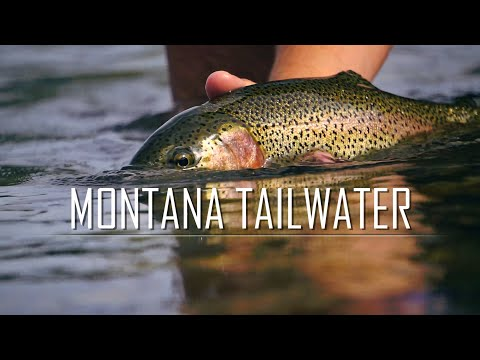 Montana Tailwater   Missouri Caddis Hatch