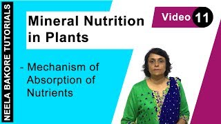 Mineral Nutrition in Plants - Mechanism of Absorption of Nutrients