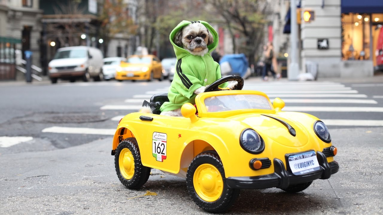 New York Dog Has $1,500 Luxury Car Collection