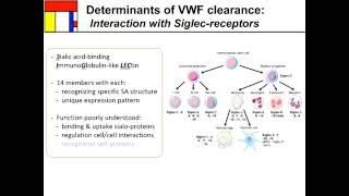 Clearance of von Willebrand Factor