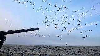 Охота  на утку.(, 2016-02-15T16:40:01.000Z)