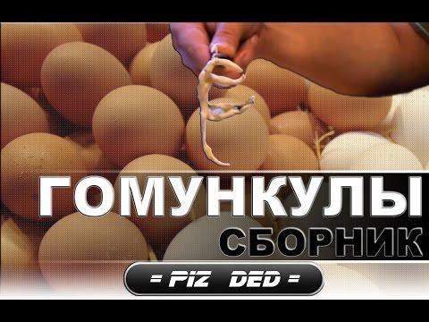 Видео, Гомункул. Сборник