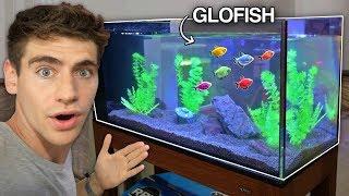 *NEW* GLO-FISH AQUARIUM!!