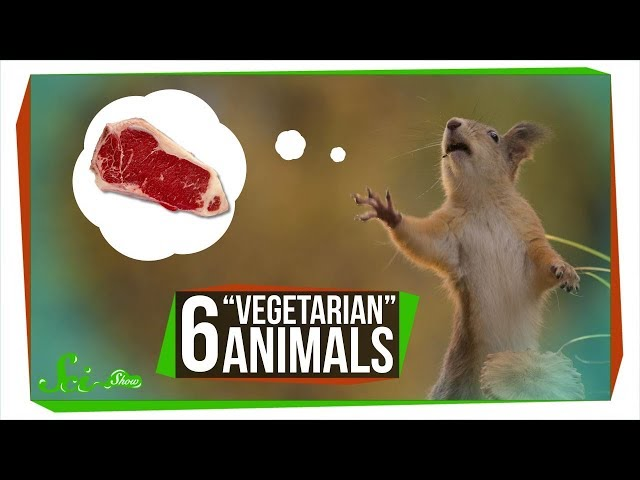 6 Vegetarian Animals that Will Give You Nightmares