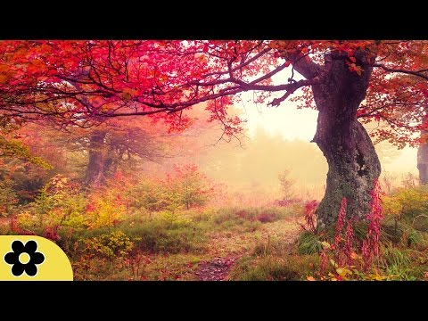 Healing Meditation Music, Relaxing Music, Music for Stress Relief, Background Music, ✿2201C