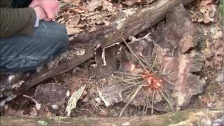 How To Make A Camp Fire: Building A Fire - The Basics
