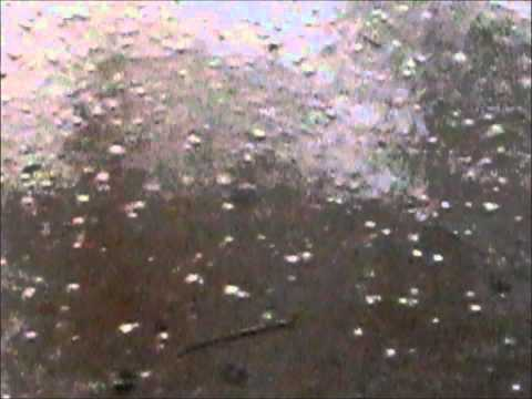 Hail Storm With Pictures