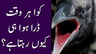 Kawa Har Waqt Dara Hua Kiyun Rehta Hai   Aik Anokhi Mantak   The Urdu Teacher