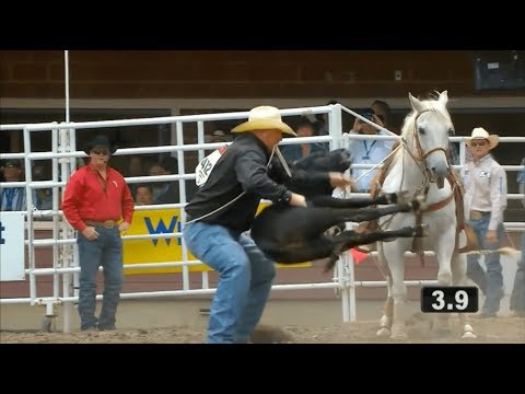 Prosecute illegal rodeo cruelty at the Calgary Stampede