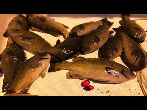 How To Catch OPALEYES From Various Kinds Of Fish In The Water!!