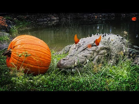 Monster - Crocodile & Alligator Halloween 2019