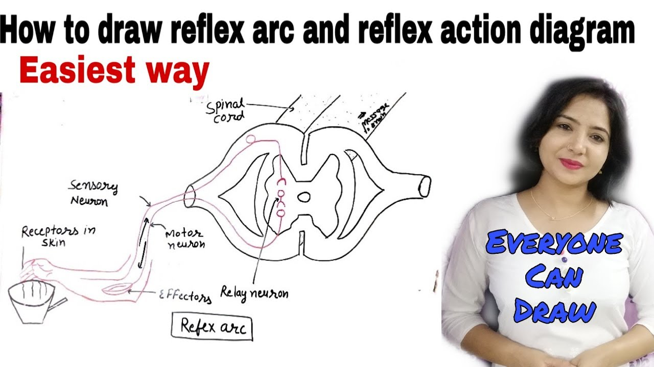 How to draw reflex arc diagram easily ||Easiest way ||Control and  coordination ||10th chap 07 || - YouTubeYouTube