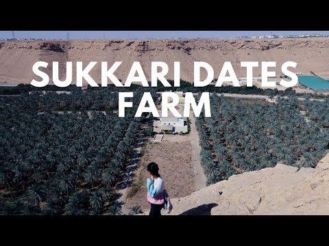 WHAT I EAT /  DATE FARM EDITION  / HEALTHY VEGAN  / فيجن / وجبات يوم و ليلة في المزرعة