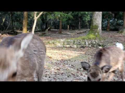 Kyoto, Arasiyama, Nara - my trip to Japan
