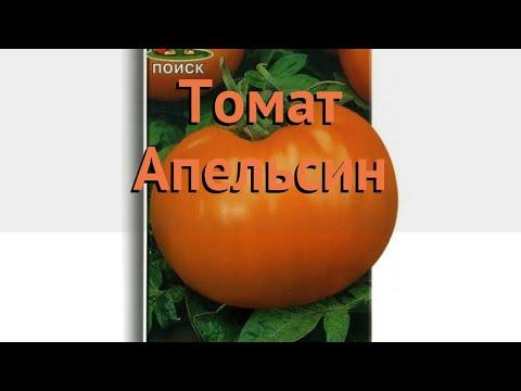 Томат обыкновенный Апельсин (apelsin) 🌿 томат Апельсин обзор: как сажать семена томата Апельсин