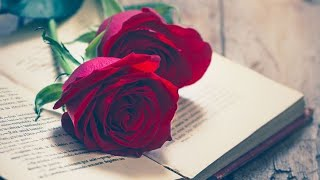 My Love St...