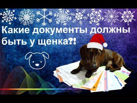 Dogs| Какие документы должны быть у щенка!?