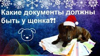Dogs  Какие документы должны быть у щенка!?