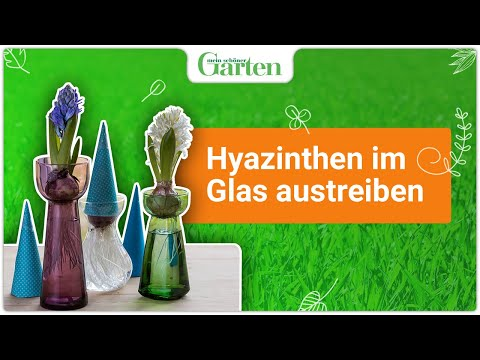 gartentipp hyazinthen im glas treiben youtube. Black Bedroom Furniture Sets. Home Design Ideas