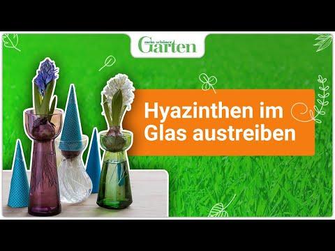gartentipp hyazinthen im glas treiben youtube. Black Bedroom Furniture Sets. Home Design Ideas
