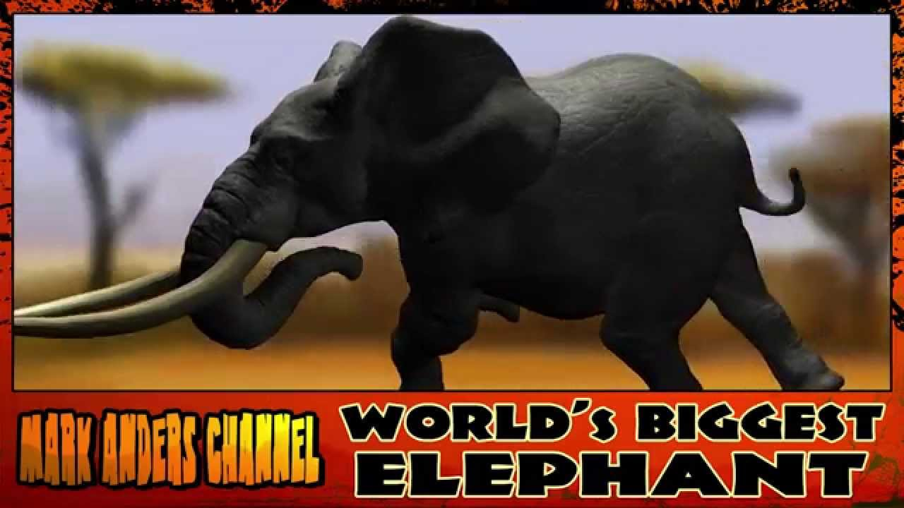 Biggest Elephant in the World - YouTube