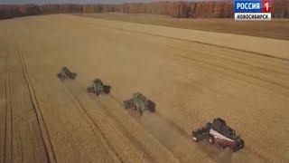 Около 700 тысяч тонн сибирского зерна планируют отправить на экспорт