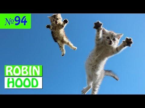 ПРИКОЛЫ 2017 с животными. Смешные Коты, Собаки, Попугаи // Funny Dogs Cats Compilation. Май №94